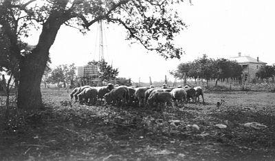 Adam Homestead 1914